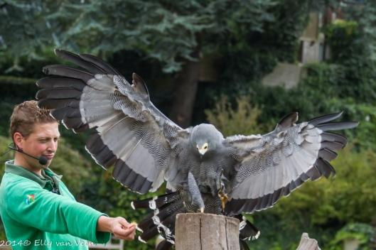 De vogelshows zijn leuk en informatief