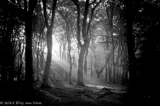 Tegenlicht in het bos.