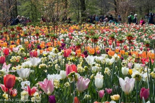 Kleurige bolbloemen