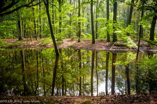 Prachtige reflecties in het water