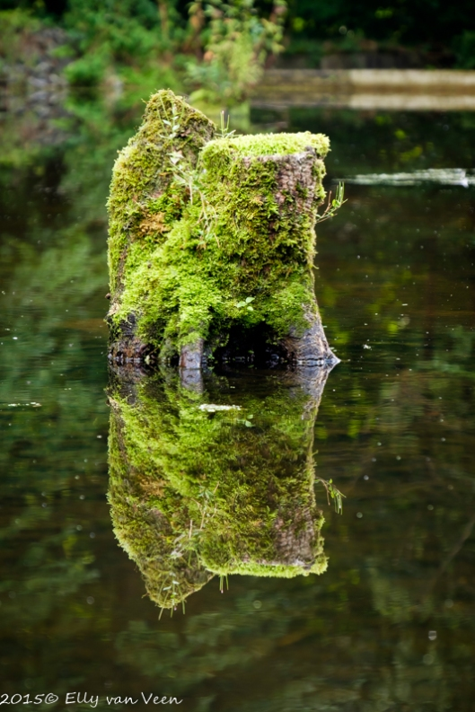Reflectie in het water