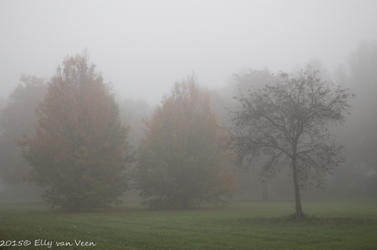 mist-4