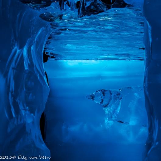 Pinguin onder water