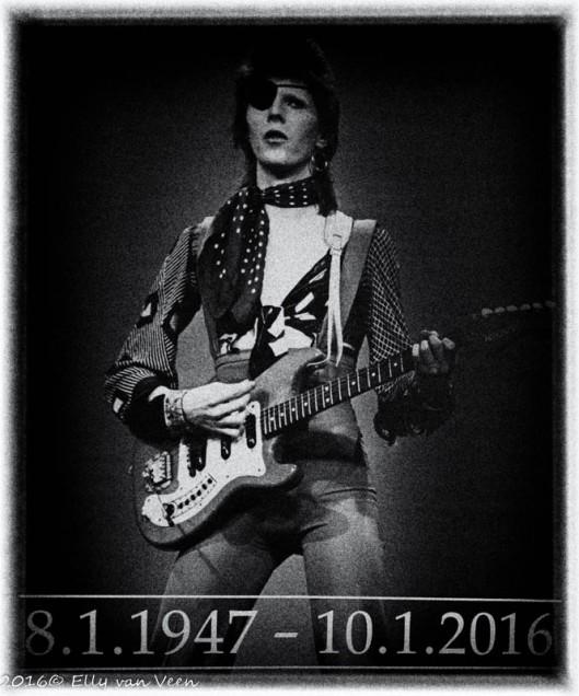 Bowie (1 van 1)