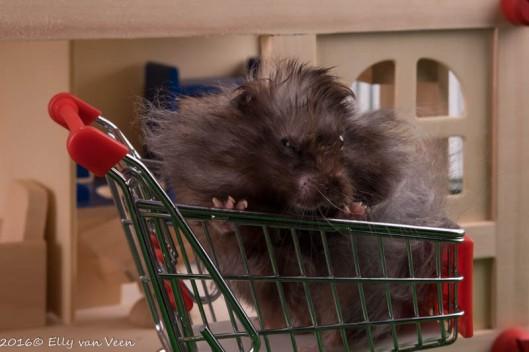 even die AH-hamster nadoen..