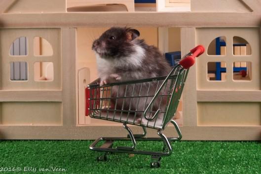 hamster-3945