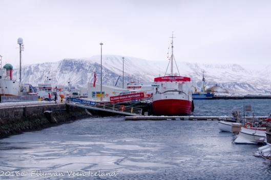 Reykjavik-4646