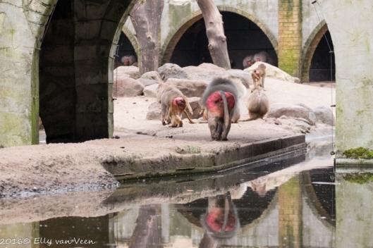 Dierenpark amersfoort-5385