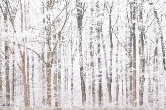 winter-1565