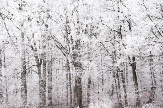 winter-1578