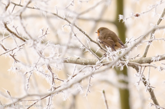 winter-1594