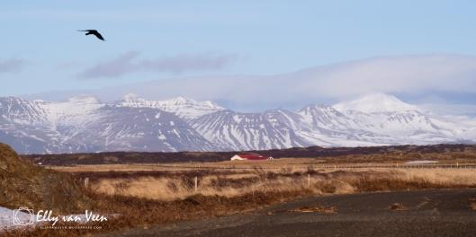 Snæfellsnes-2618